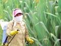 防治玉米三代粘虫的方法