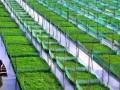 二十年后的中国农业,农民收入将超过城里人!