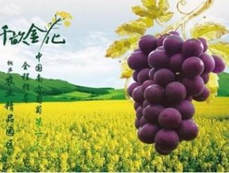 浙江桐庐·瑶琳千亩金花首届采摘葡萄节开幕