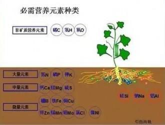 10大肥料技术问题解析!
