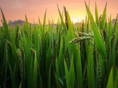 把农业农村优先发展方针落到实处