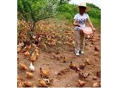 信宜金垌农家妇女讲述赚钱道路