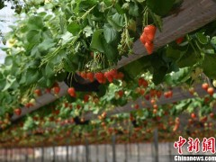 """探访""""新农人""""的自动化农场:农业不再""""看天吃饭"""""""