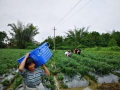 引进现代农业 怀集打造大湾区绿色农产品集散地